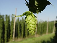 ND Hops Growing Workshop in Minot